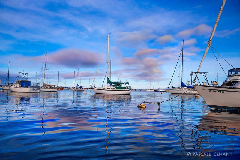 Moored in Monterey harbor