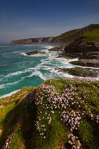 Thrift in May at Trebarwith Strand, Cornwall