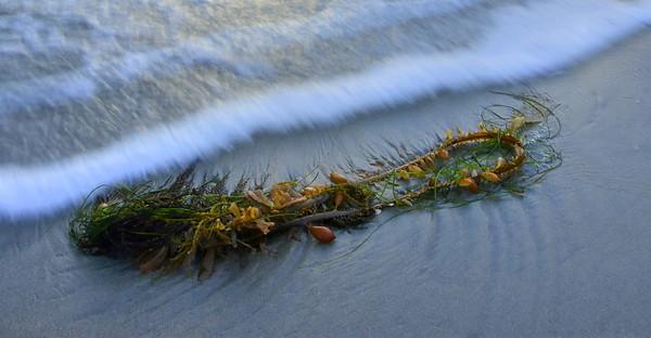 Sand, Seaweed & Surf