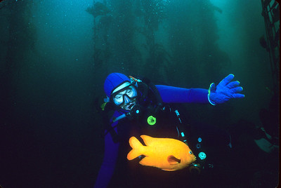 Diver & Garibaldi in Kelp Forest