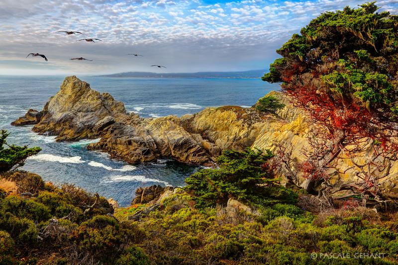 Flight over Point Lobos