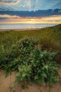 In the Dutch dunes