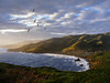 Pelican flight over Marin Headlands