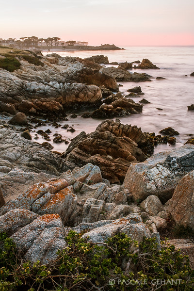 Pacific Grove seashore 4