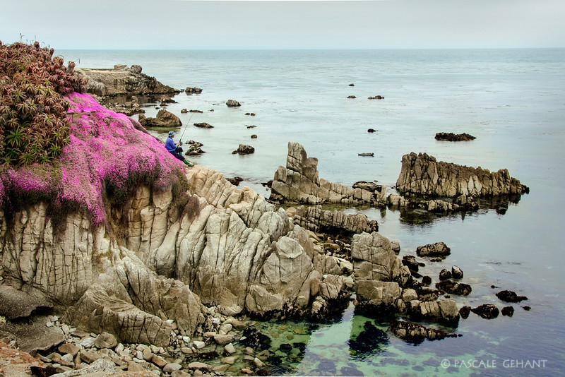 Shoreline in bloom with fisherman- Pacific Grove