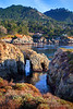 Pelican Point- Point Lobos