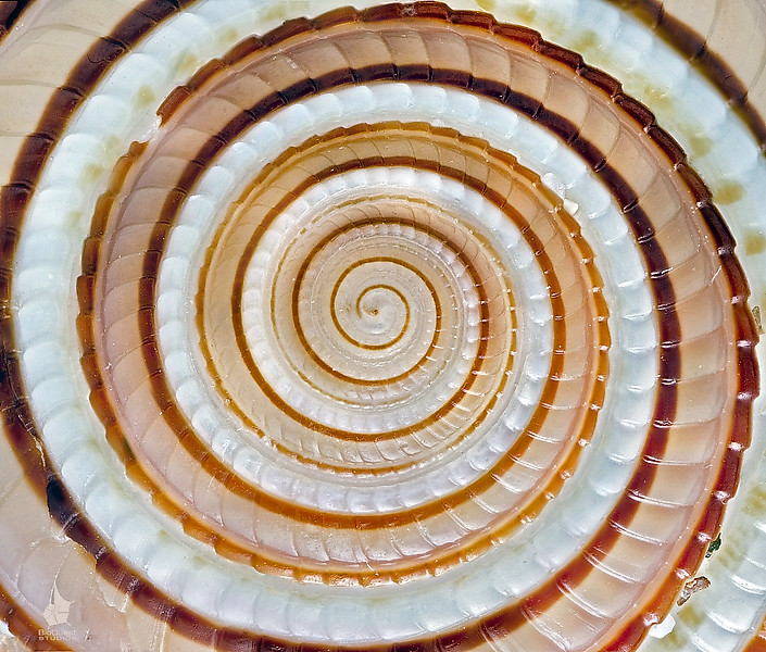 A seashell under microscope.