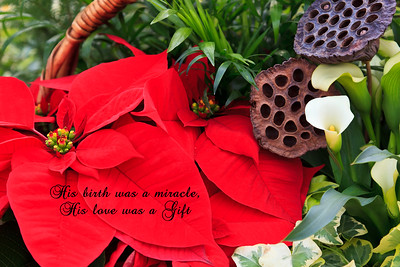 Red poinsettias in basket - His birth was a miracle, His love was a Gift