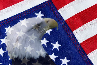 American Flag & Bald EagleBald Eagle with American Flag