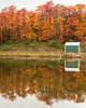 Foliage 07 (jpeg)