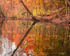 Autumn Reflections (jpeg)