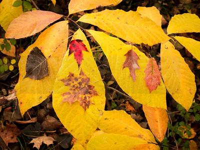 Autumn Variety (jpeg)