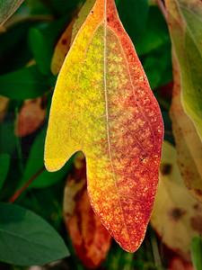 Autumn Synopsis In A Single Leaf (jpeg)