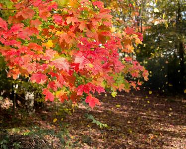 Autumn Corydon 02-1010629-2-2