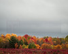 Foliage 06 (jpeg)