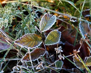 Winter (frost) 01-1010821-2-2-2
