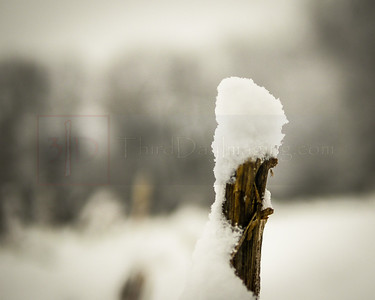 Snow on Cornstalk-1000621-2-2-2