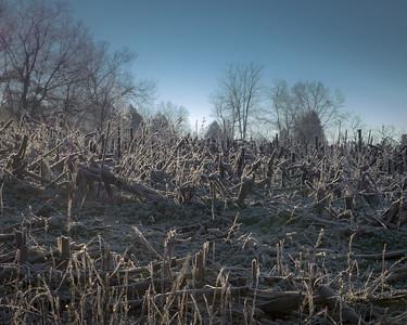 Frosty Stubble 01-2-2-2