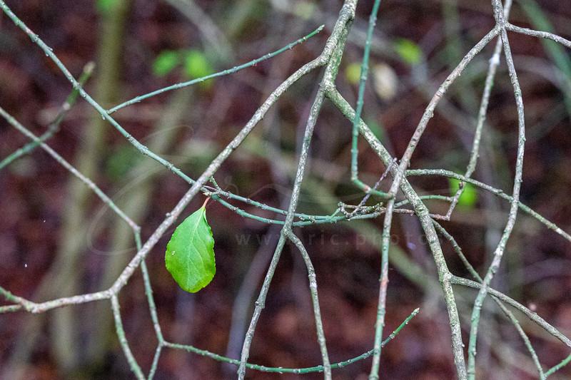 une seule feuille | a single leaf