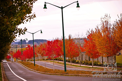The Colors of Fall  ..... Rows of trees with red dried leaves ..... a Lensbaby Composer Pro image  © Copyright Hannah Pastrana Prieto