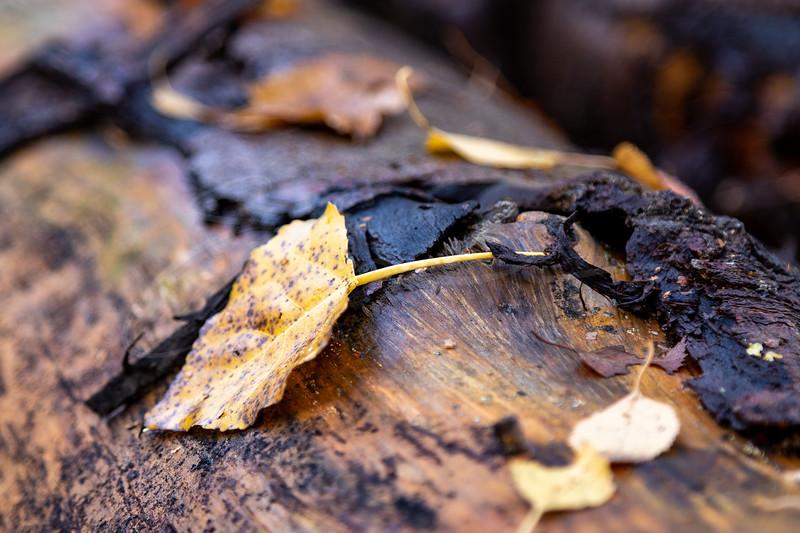 les feuilles et le tronc   the leaves and the trunk