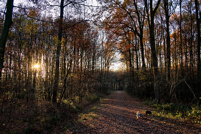 sunset in the forest in november