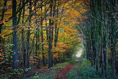 dans la forêt   in the forest