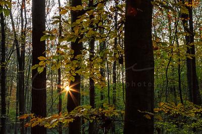 dans la forêt | in the forest