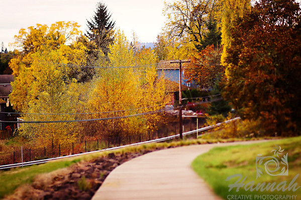 The Colors of Fall  ..... a Lensbaby Composer Pro image  © Copyright Hannah Pastrana Prieto