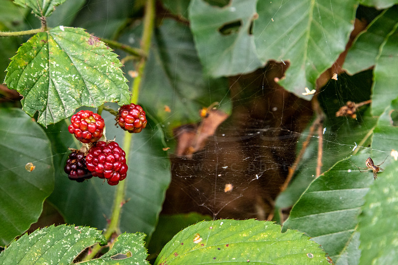 l'automne à la forêt | autumn in the forest