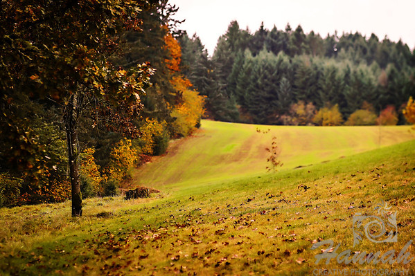 The Colors of Fall  ..... vast rolling hills ..... a Lensbaby Composer Pro image  © Copyright Hannah Pastrana Prieto