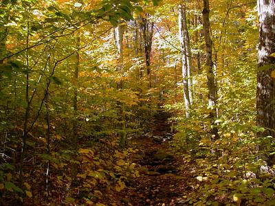 Mt Adams Trail - NH