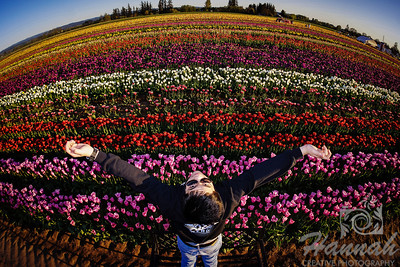A boy with arms spreading with the background of the colorful tulip fields taken at Wooden Shoe Tulip Farm in Woodburn, OR  © Copyright Hannah Pastrana Prieto