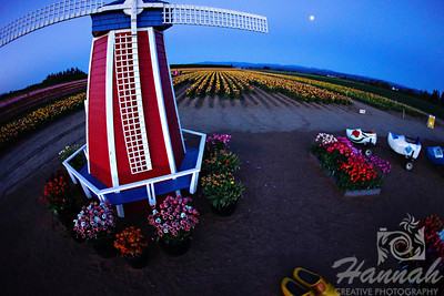 Windmill at the Wooden Shoe Tulip Farm in Woodburn, OR  © Copyright Hannah Pastrana Prieto