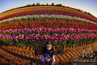 A boy sitting on a bench with the background of the colorful tulip fields taken at Wooden Shoe Tulip Farm in Woodburn, OR  © Copyright Hannah Pastrana Prieto