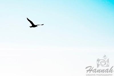 A silhouette of a seagull in flight.   © Copyright Hannah Pastrana Prieto
