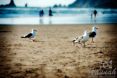 View of the beach with three seagulls on the shore.  Shot at Cannon Beach, Oregon Coast.  © Copyright Hannah Pastrana Prieto