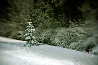 A snowy pine tree shot with the lensbaby composer and double glass optic.  © Copyright Hannah Pastrana Prieto