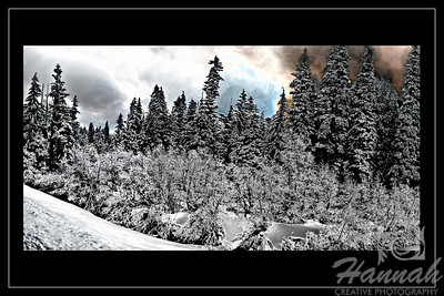 Panorama of snowy pine trees in digital art with black border Location: Mt.Hood, Government Camp, Oregon  © Copyright Hannah Pastrana Prieto