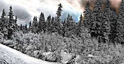 Panorama of snowy pine trees in digital art Location: Mt.Hood, Government Camp, Oregon  © Copyright Hannah Pastrana Prieto