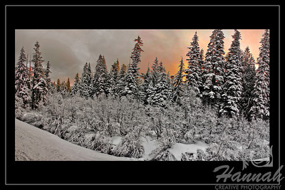Panorama of snowy pine trees shot at dawn with black border Location: Mt.Hood, Government Camp, Oregon  © Copyright Hannah Pastrana Prieto