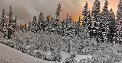 Panorama of snowy pine trees shot at dawn Location: Mt.Hood, Government Camp, Oregon  © Copyright Hannah Pastrana Prieto