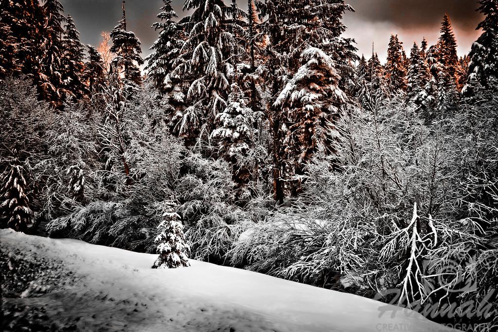 Snowy pine trees shot at dawn Location: Mt.Hood, Government Camp, Oregon  © Copyright Hannah Pastrana Prieto