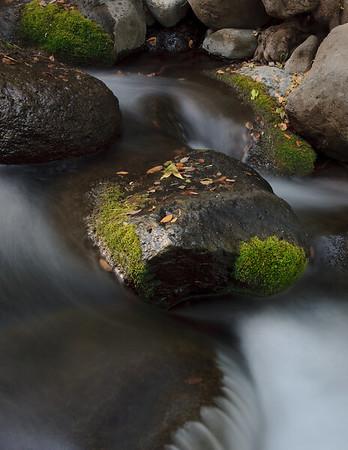 Mossy rocks hold jeweled treasures along Oak Creek