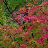 Arizona Fall Color Workman Creek