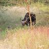 Horns - Bandi Animal Reserve near Saly, Senegal