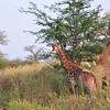 Looking at you - Bandi Animal Reserve near Saly, Senegal