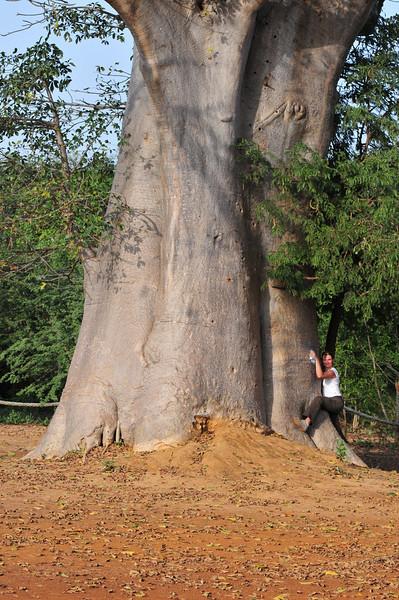 Baobab tree and Birgit