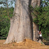 Baobab tree and Birgit