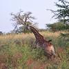 Run - Bandi Animal Reserve near Saly, Senegal